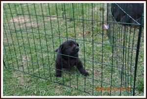 2010-05-01 Kaxa 4 veckor gammal. Väger 2131 gram