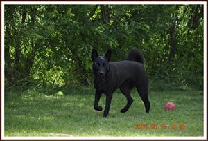 2010-06-19 Dixy