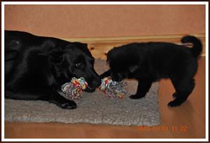 2010-05-03 Dragkamp med mamma