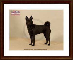 2008-12-06 Dixy på Hund 2008