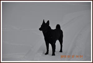 2013-01-27 Dalomsvikens Queen Of Black
