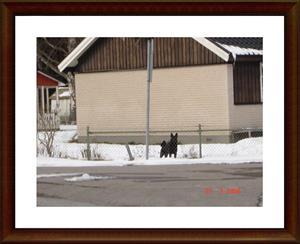 2008-03-23 Kollar in närmsta granne