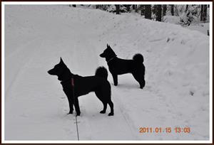 2011-01-15 Något intressant i skogen