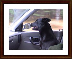 Dixy på väg till skogen