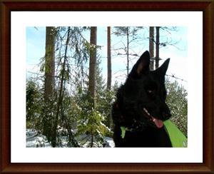2008-03-26 Dixy i skogen