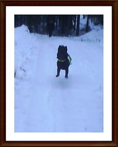2008-01-04 Full fart i skogen