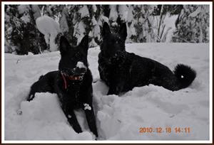 2010-12-18 Dixy & Kaxa 3