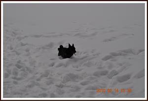 2010-02-14 Dixy på isen (Lövsjön)