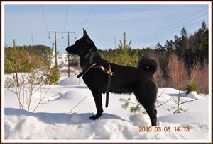 2010-03-08 Har fått syn på något i skogen