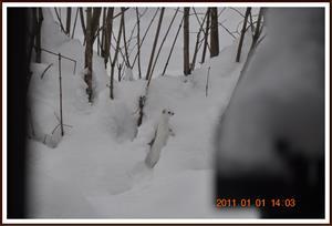 2011-01-01 Vesslan 12