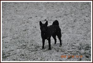2009-11-04 Dixy med årets första snö
