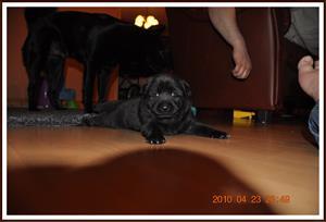 2010-04-23 Kaxa 3 veckor gammal. Väger 1805 gram