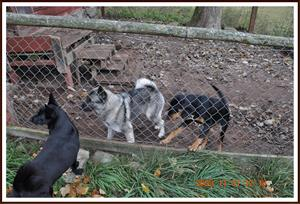 2009-11-01 Dixy med nya vänner Nicke & Bella