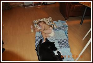 2011-11-02 Tess sover gott med sin vakthund