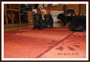 2004-04-21 Gänget på utflykt i vardagsrummet