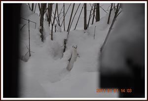 2011-01-01 Vesslan 13
