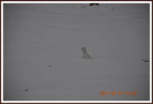 2011-01-01 Vesslan