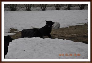 2011-03-24 Ha Ha min boll