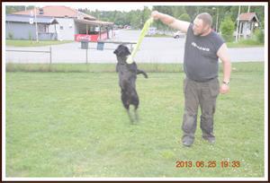 2013-06-25 Kaxa leker med husse 13