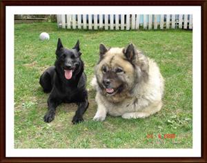 2008-04-27 Dixy & Mysan