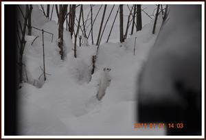 2011-01-01 Vesslan 11