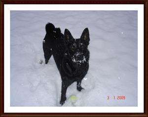 2009-01-03 Dixy med snöskägg