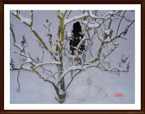 2009-01-03 Dixy leker kurragömma