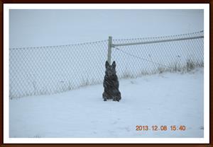 2013-12-08 Dixy i årets första snöfall