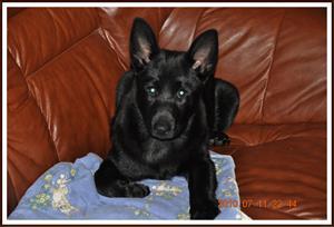 2010-07-11 Kaxa får ligga i soffan