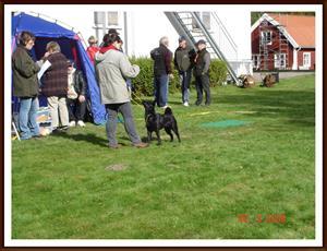 2008-09-28 Här är vi på Sydsvenska Älghundsklubbens utställning i Skedhult. Där vart Dixy BIR med CK