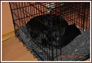 2010-05-01 Dixy & Kaxa får båda plats i buren