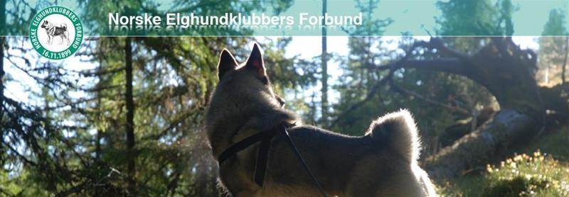 Logo Norsk älghundsförbundet