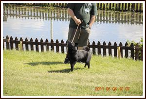 2011-06-04 Kaxa i hundparad på Elmia. Har hittat matte i publiken