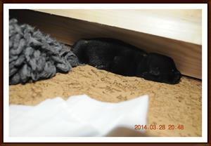 2014-03-28 Kolmossens Beast fick inte vara med på filten