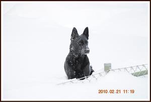 2010-02-21 Dixy sitter vid staketet som är 90 cm högt