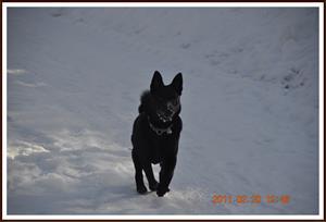 2011-02-20 Kaxa