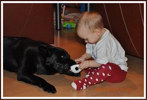 2010-02-01  Dixy & Tess har dragkamp om bollen
