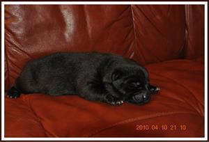 2010-04-10 Kaxa 1 vecka gammal. Väger 884 gram
