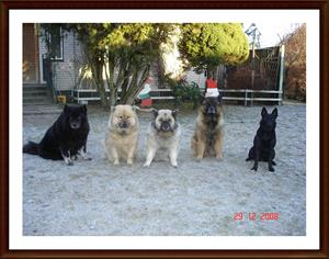 2008-12-29 Dixy med vänner önskar GOTT NYTT ÅR