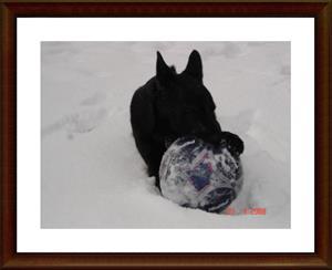 2008-03-23 Min bästa leksak