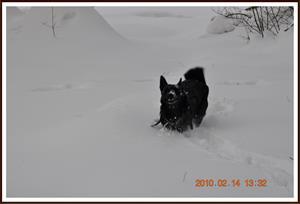 2010-02-14 Dixy