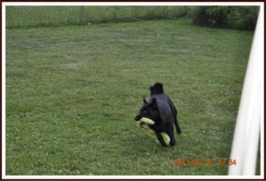 2013-06-25 Kaxa leker med husse 17
