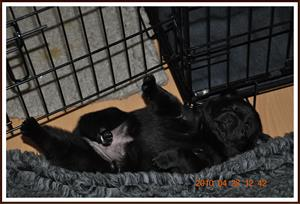 2010-04-28 Kaxa våran sötnos