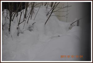 2011-01-01 Vesslan 7