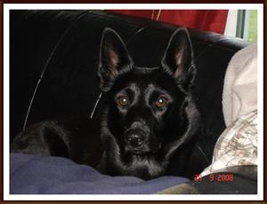 2008-09-29 Idag har jag varit & röntgat mina höfter, knän och armbågar, så nu vilar jag upp mig i soffan här hemma