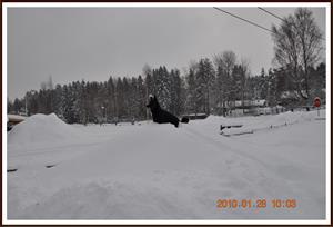 2010-01-28 Dixy