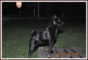 2012-05-14 Kaxa Ståtlig hund
