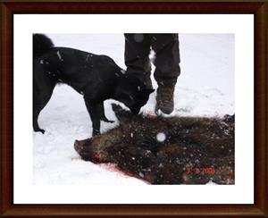2008-02-03 Första kontakten med vildsvin