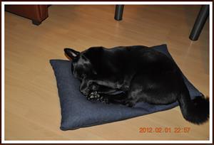 2012-02-01 Kaxa sover sött