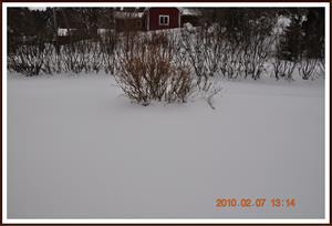 2010-02-07 Vinter på baksidan 1